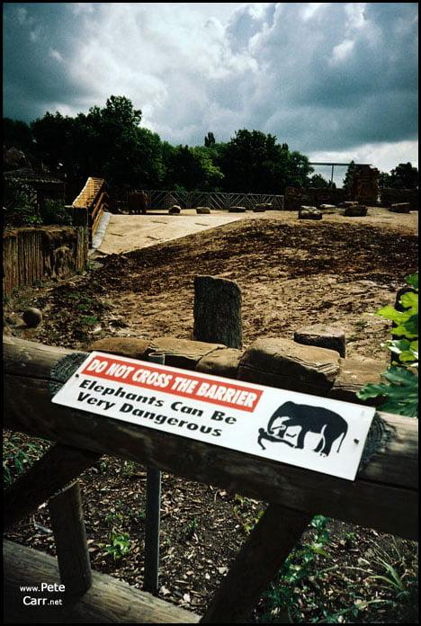 killer elephants