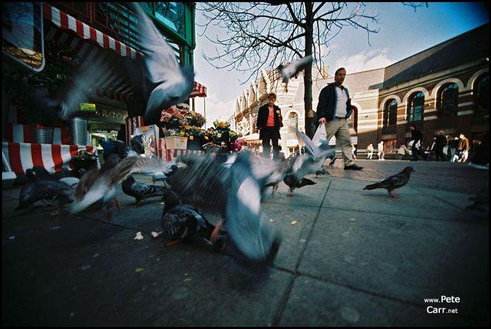 Fly Birdies