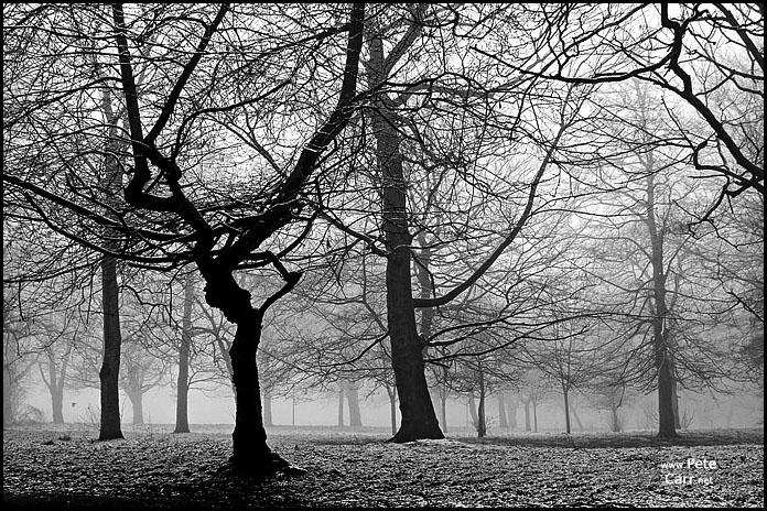 Winter fog in Sefton Park